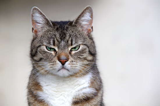 Eine schlecht gelaunte Katze
