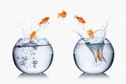 Fische springen von einem Goldfischglas ins andere