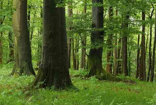 Wie Wird Man Eigentlich Forstwirt Studis Online