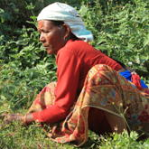 Frau bei der Ernte