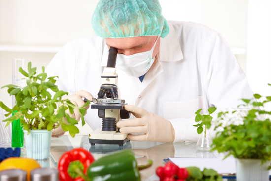Mann schaut in Mikroskop, davor Gemüse