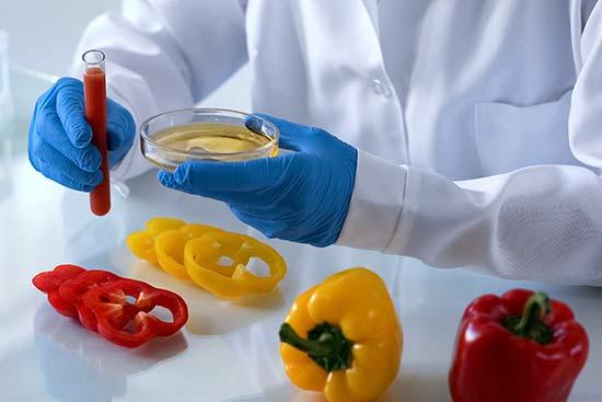 Prüfung der Inhaltsstoffe einer neuen Paprika-Züchtung im Labor