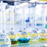 Reagenzgläser im Chemielabor