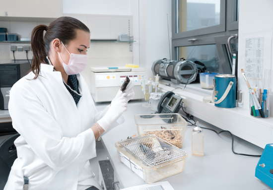 Wissenschaftlerin im Labor mit mehreren Mäusen, eine hält sie in der Hand