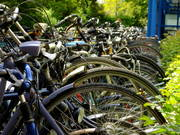 Lange Reihe von nebeneinanderstehenden Fahrrädern.
