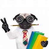 Hund mit Brille, Handschuhen, Bücher und Bleistift im Maul